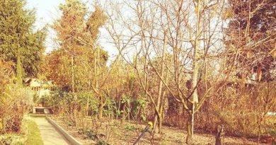 Novemberi kerti teendők