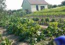 Minden napra 2 kert – A legszebbek közül CSURGÓI NAPSUGÁR EGYESÜLET Csurgó