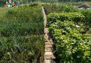 Minden napra 2 kert – A legszebbek közül  MAJOR MÁTÉ ÉS ÉDESANYJA Kóspallag