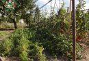 Minden napra 2 kert – A legszebbek közül  FORGÁCS JÓZSEF ÉS FELESÉGE KOCSIS ANNA Martfű