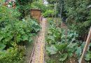 Minden napra 2 kert – A legszebbek közül  SZABÓ PÁLNÉ ÉS FÉRJE SZABÓ PÁL Muhi