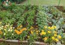 Minden napra 2 kert – A legszebbek közül  KÓRÉNÉ HORVÁTH ANITA Nagykanizsa