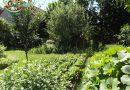 Minden napra 2 kert – A legszebbek közül Doró Antal Nagykovácsi
