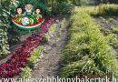 Minden napra 2 kert – A legszebbek közül Madár Ferencné Solt