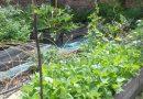 Minden napra 2 kert – A legszebbek közül JENEI ZSUZSANNA ÉS MADAR LAJOS Cegléd
