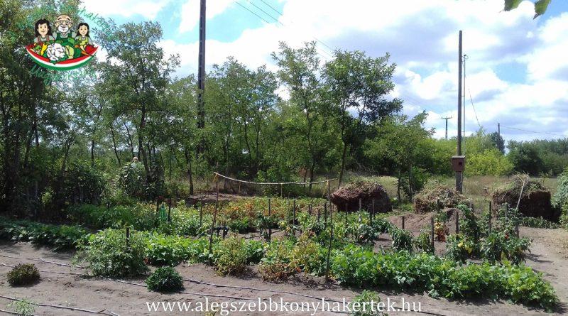 Minden napra 2 kert – A legszebbek közül TÓTHNÉ WETTER JUDIT Cegléd