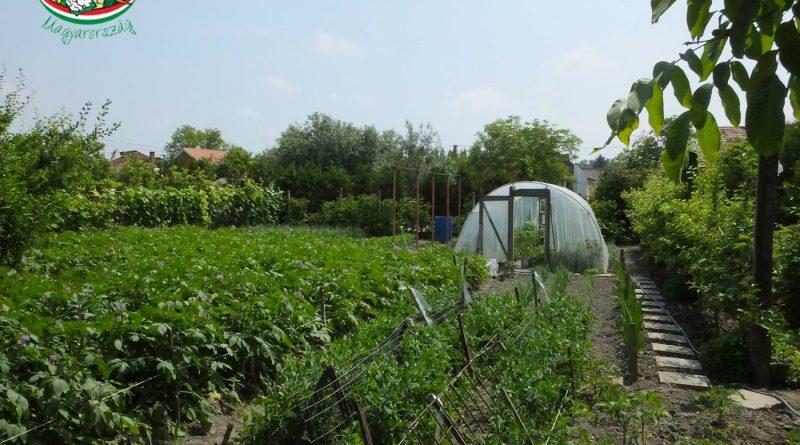Minden napra 2 kert – A legszebbek közül BERTALAN FERENC, BERTALAN FERENCNÉ VALAMINT AZ UNOKÁK ÁSVÁNYI MÁRK ÉS RÉKA Darnózseli