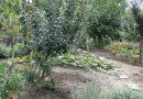 Minden napra 2 kert – A legszebbek közül KÓSA TAMÁS MIKLÓS és KÓSÁNÉ SZABÓ ILDIKÓ Eger