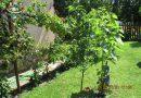 A szomszéd kertje sosem zöldebb?