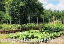 Minden napra 2 kert – A legszebbek közül GRAEFL MAJOR KÉTÚTKÖZ Magánkertesként vett részt Poroszló