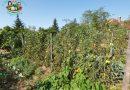 Minden napra 2 kert – A legszebbek közül GYENES JÁNOS ÉS FELESÉGE PIROSKA Szada