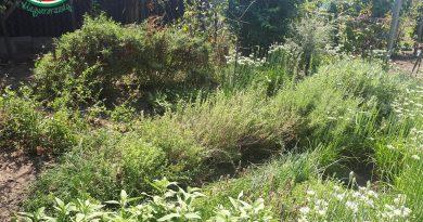 Minden napra 2 kert – A legszebbek közül RÉKASINÉ DR. OLÁH GIZELLA Szank