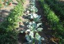 Minden napra 2 kert – A legszebbek közül ZUBIK TIBOR Szentistván