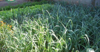 Minden napra 2 kert – A legszebbek közül KIS ZOLTÁN Temerin