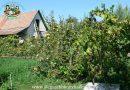 Minden napra 2 kert – A legszebbek közül ZÁM GYÖRGY Tiszaörs