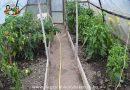 Minden napra 2 kert – A legszebbek közül VADÁSZ ANNA Tunyogmatolcs