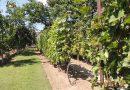 Minden napra 2 kert – A legszebbek közül KOMLÓSI ERZSÉBET ESZTER Magánkertesként vett részt Gyula