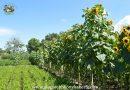Minden napra 2 kert – A legszebbek közül KARCAGI ZSOLT ÉS GYÖNGYÖSI ÉVA Hajdúnánás