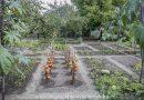 Minden napra 2 kert – A legszebbek közül KOVÁCS CSALÁD Hont