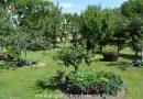 Minden napra 2 kert – A legszebbek közül FARSANG CSALÁD Káld