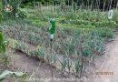 Minden napra 2 kert – A legszebbek közül BÁNÓCZKI DEZSŐ ÉS BÁNÓCZKI DEZSŐNÉ Kiskunhalas