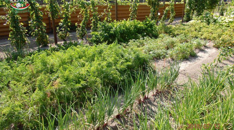 Minden napra 2 kert – A legszebbek közül PŐSZ MIKLÓS Kiskunhalas