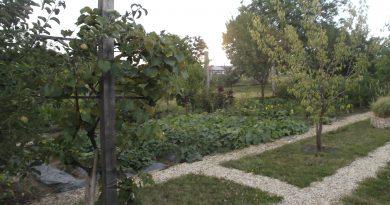 Minden napra 2 kert – A legszebbek közül PÁSZTOR RÓBERT Kistokaj