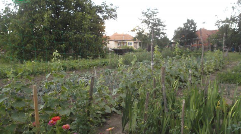 Minden napra 2 kert – A legszebbek közül VÁRADI LÁSZLÓ Kistokaj