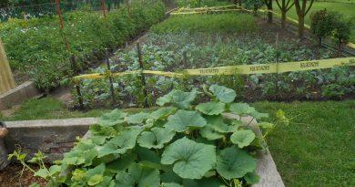 Minden napra 2 kert – A legszebbek közül SÁROSI KÁROLY Magánkertesként vett részt Lőrinci