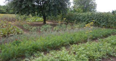 Minden napra 2 kert – A legszebbek közül LENGYEL GÁBOR ÉS LENGYEL GÁBORNÉ Magánkertesként vett részt Lőrinci – Selyp