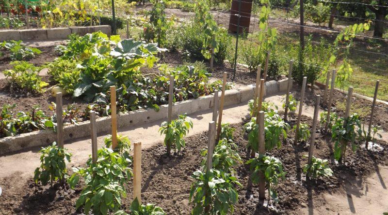 Minden napra 2 kert – A legszebbek közül SÁNDOR MENYHÉRT ÉS FELESÉGE MARKÓT PIROSKA Martfű
