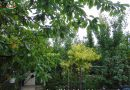 Minden napra 2 kert – A legszebbek közül KOVÁCS ERNŐ ÉS FELESÉGE BEHUL BRIGITTA Mosonmagyaróvár
