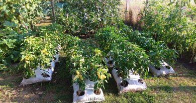 Minden napra 2 kert – A legszebbek közül BALLA MÁRTON Muhi