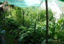 Minden napra 2 kert – A legszebbek közül SÓSTAI JÓZSEF Nagykanizsa
