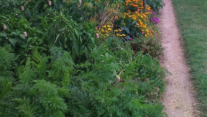 Minden napra 2 kert – A legszebbek közül  Almásfüzitő – Szomódról SÖJTÖRI SÁNDOR ÉS SÖJTÖRI SÁNDORNÉ