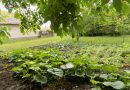 Minden napra 2 kert – A legszebbek közül  Magánkertesként vett részt Bakonszeg BAKONSZEGI ZÖLDLIGET ÓVODA