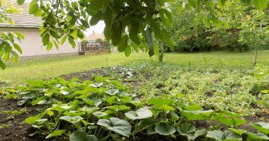 Minden napra 2 kert – A legszebbek közül Magánkertesként vett részt a programban BAKONSZEGI ZÖLDLIGET ÓVODA Bakonszeg