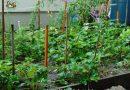 Minden napra 2 kert – A legszebbek közül BICSKE VÁROSI ÓVODA KAKAS TAGÓVODÁJA KISVAKOND CSOPORT Bicske