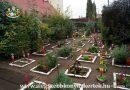 Minden napra 2 kert – A legszebbek közül ÖLBEY IRÉN ÁLTALÁNOS ISKOLA Magánkertesként vett részt Döge