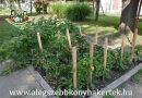 Minden napra 2 kert – A legszebbek közül DUNASZENTGYÖRGYI II. SZ. ÓVODA Dunaszentgyörgy
