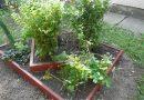 Minden napra 2 kert – A legszebbek közül EDELÉNYI MÁTYÁS ÓVODA ÉS BÖLCSÖDE Magánkertesként vett részt Edelény