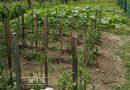 Minden napra 2 kert – A legszebbek közül BÁNHIDI ANDRÁS Patak