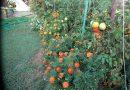 Minden napra 2 kert – A legszebbek közül STÁNGLI LÁSZLÓ Pécs