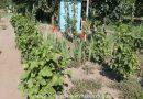Minden napra 2 kert – A legszebbek közül ERDÉLYI SÁNDOR Szabadegyháza