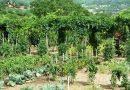 Minden napra 2 kert – A legszebbek közül FARKAS JÁNOS ÉS NEJE Szekszárd