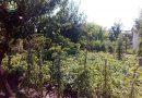 Minden napra 2 kert – A legszebbek közül SZILÁGYI JÓZSEFNÉ Üllő