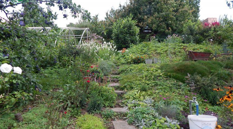 Minden napra 2 kert – A legszebbek közül MILLEY ISTVÁNNÉ Magánkertesként vett részt Zalaegerszeg