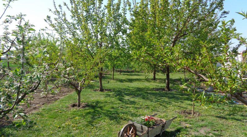 Apátfalva – Csodálatos kertek versenyeztek