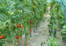 Szank – A legszebb kerteket díjazták Szankon