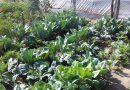 Minden napra 2 kert – A legszebbek közül Cegléd VARGA KÁROLYNÉ ÉS CSALÁDJA